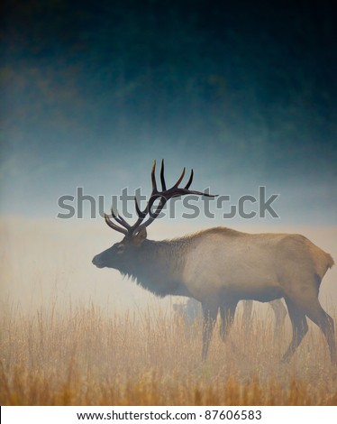 Mature male buck elk stands in profile in mist - stock photo