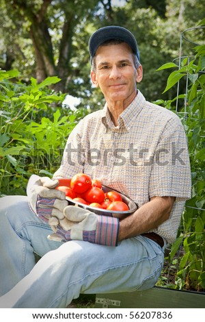 Mature male gardener holding bowl of tomatoes he has just harvested.