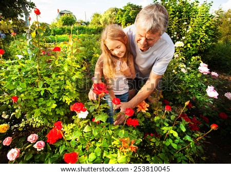 Mature man with child caring for roses in the garden - stock photo
