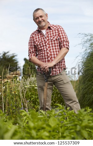 Mature Man Working On Allotment - stock photo