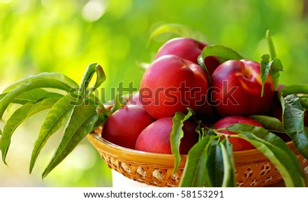 Mature peachs on basket. - stock photo