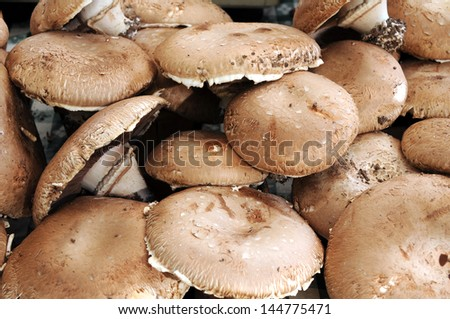 mature portobello mushroom - stock photo