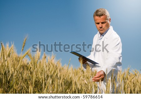 Mature technician holding and examining a wheat ear during a quality control in field - stock photo