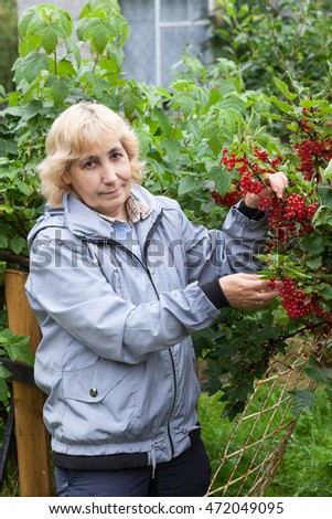 Mature woman gardener holding red currant berries on the green bushes against wooden house