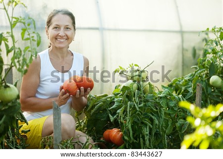 Mature woman picking tomato in greenhouse - stock photo