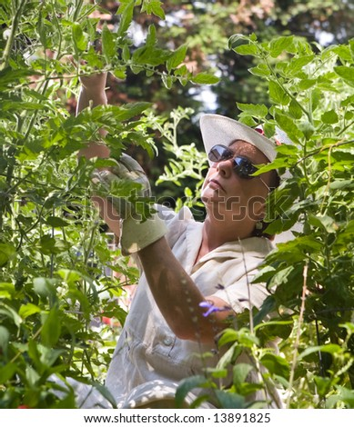 Mature woman tending her summer garden, framed by tomato plants and greenery