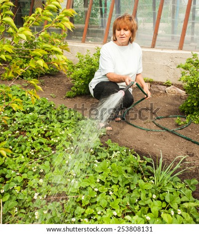 Mature woman watering garden beds - stock photo
