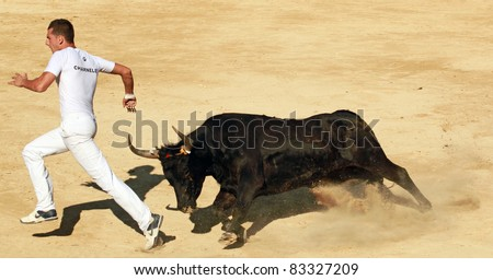 MAUGUIO, FRANCE - AUGUST 19: Competitor Charnelet  runs away from angry bull during traditional bull racing competition in Mauguio, Southern France on August 19, 2011. - stock photo