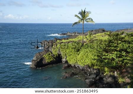 Maui coastal palm tree along road to Hana. Palm trees are found all over the Hawaiian Islands. - stock photo