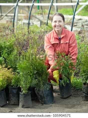 Maure woman chooses thuya sprouts at market - stock photo