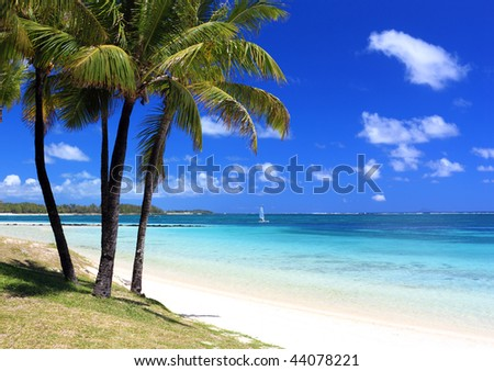 Mauritius: wonderful beach with palm trees in tropical island - stock photo