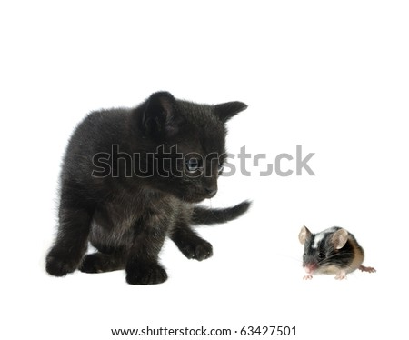 mause and cat on white bacxkground - stock photo