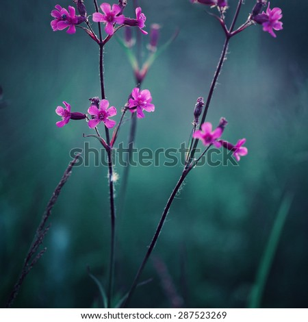 may wild beautiful meadow pink flowers on green natural background. Fresh bright morning photo - stock photo