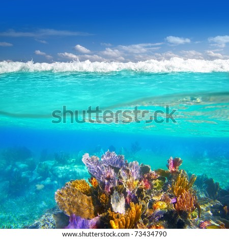 Mayan Riviera coral reef underwater up down waterline Mexico [Photo Illustration] - stock photo