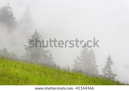 Meadow along Bald Hill Road in Redwoods national Park, California. - stock photo