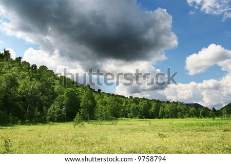 meadow and tree in summer mountain