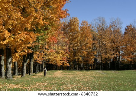 Meadow and trees in early october - stock photo
