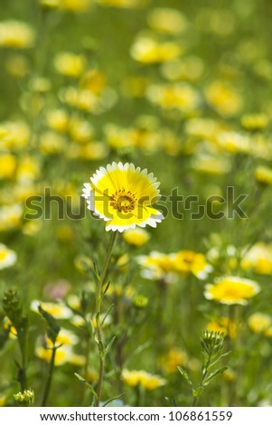 meadow at summertime - close up - stock photo