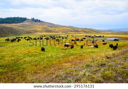 Meadow at Yellow Stone National Park - stock photo