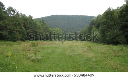 Meadow between the mountains. Wonderful scenery and landscape. On both sides there is a forest of trees. Centered in the distance we can see the high mountain