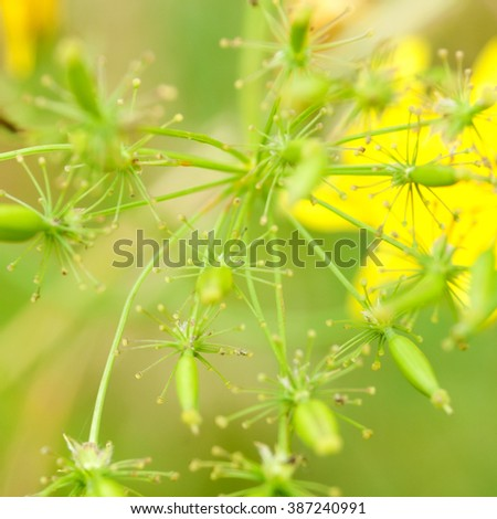 Meadow blossom close-up. Wild flowers and Shallow depth of field. - stock photo