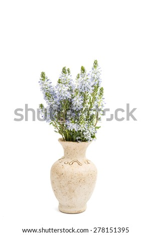 meadow blue flowers on a white background - stock photo