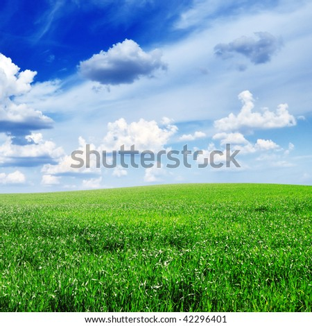 meadow covered by a grass