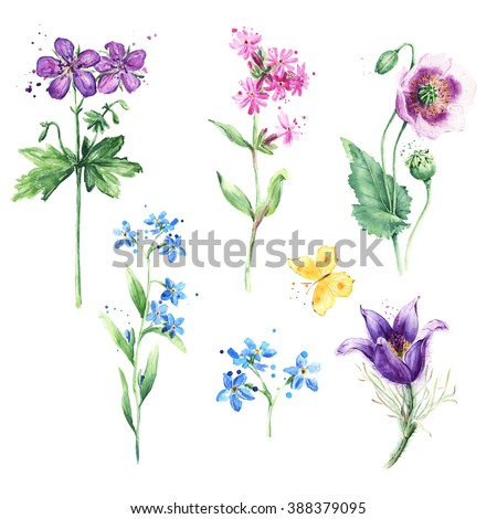 Meadow floral set. Collection with wild flowers, drawing watercolor, Poppy, Anemone, Forget-me-not and Butterfly - stock photo
