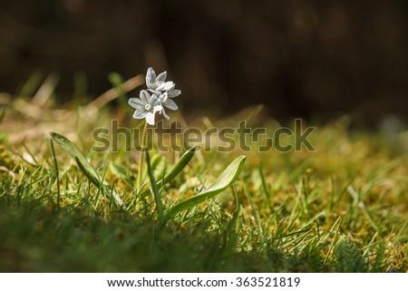 meadow flower - stock photo
