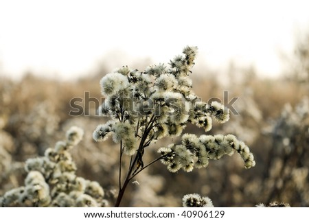 meadow flower in big close up - stock photo