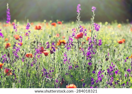 Meadow flowers - stock photo