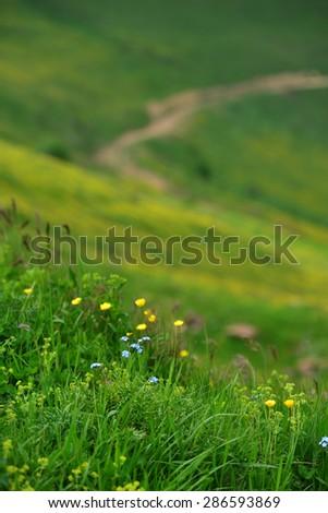 Meadow flowers - stock photo