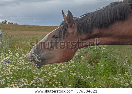 meadow flowers and a horse
