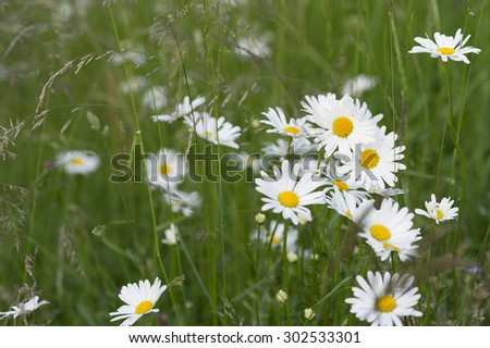 Meadow flowers in a field. - stock photo