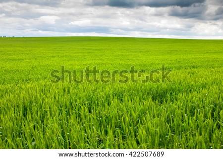 meadow grass - stock photo