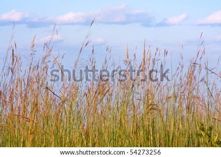 Meadow grasses background. - stock photo