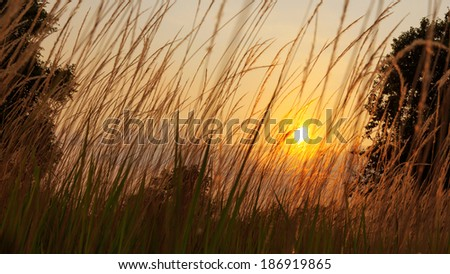 Meadow grasses background and texture - stock photo