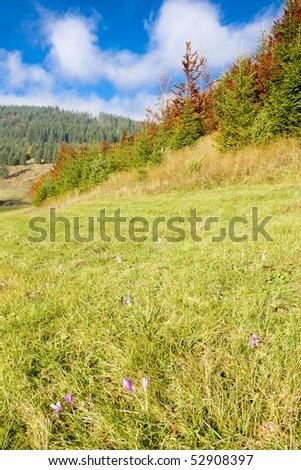 meadow in blossom, Nizke Tatry (Low Tatras), Slovakia - stock photo