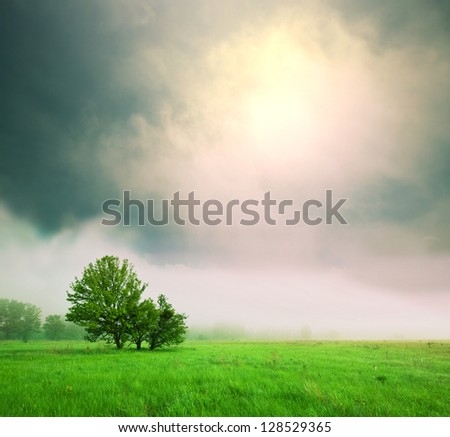 meadow in mountains - stock photo