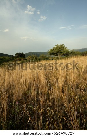 Meadow in Pyrenees, Aude, Occitanie in south of France