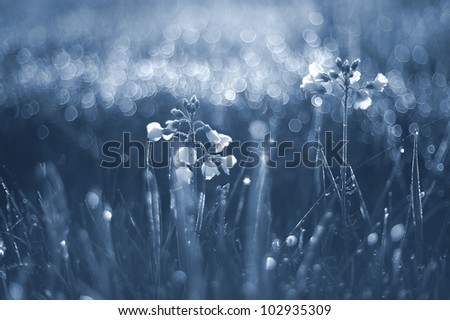 meadow in the morning with dew drops - stock photo