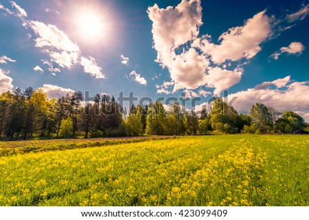 Meadow in the woods covered with yellow flowers on a cloudy spring day, the sun shines in the sky. Image in the orange-blue toning - stock photo