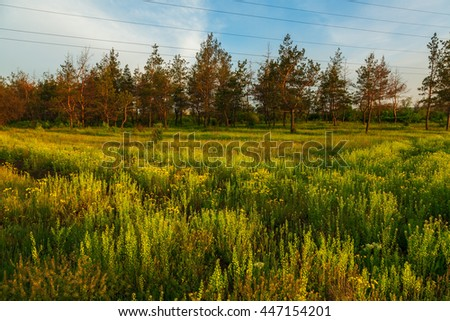 meadow near coniferous forest