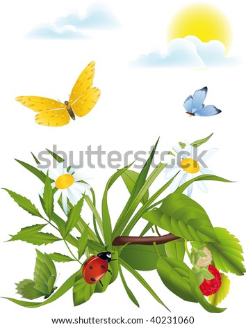 meadow of a chamomile a ladybird and butterflies - stock photo