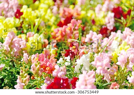 Meadow of flowers  at summer - stock photo