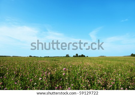 Meadow of pink clover and blue sky. - stock photo