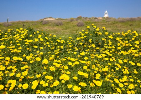 Meadow of yellow flowers among the green grass. Lighthouse in the background and blue sky. - stock photo