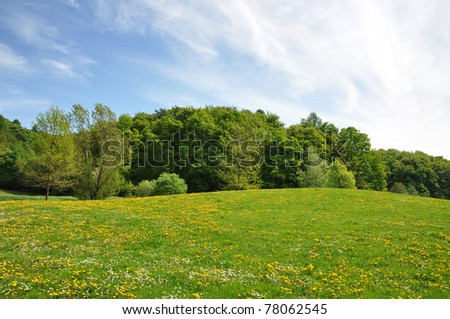Meadow on a lovely spring day - stock photo