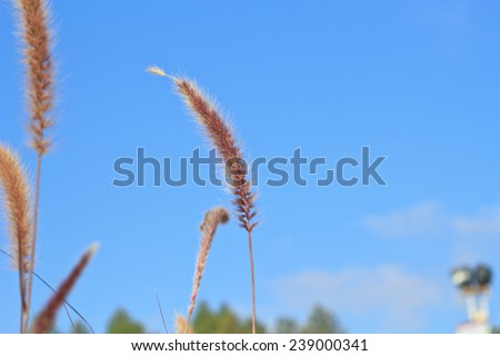 meadow on blue sky background. - stock photo