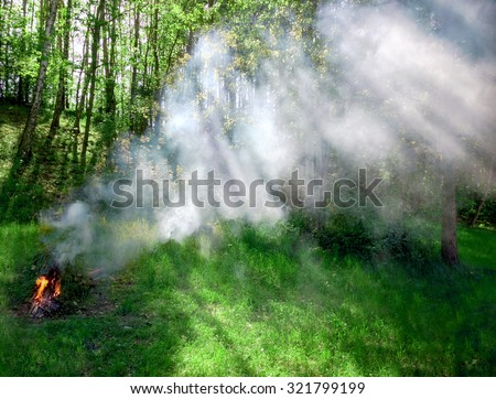Meadow on Fire and lot of Smoke. Sunbeams through the trees. - stock photo